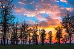 Siluette degli alberi sul fondo di tramonto fotografia stock libera da diritti