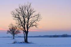 Siluette degli alberi Tramonto di inverno immagini stock libere da diritti