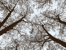 Siluette degli alberi in un parco di autunno Immagine Stock