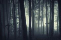 Siluette degli alberi in una foresta con nebbia immagine stock