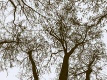 Siluette degli alberi in una foresta di inverno illustrazione vettoriale
