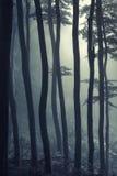 Siluette degli alberi in una foresta nebbiosa all'indicatore luminoso fotografie stock