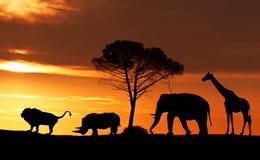 Siluette degli animali africani al tramonto nella savana Fotografia Stock