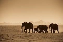 Siluette degli elefanti Immagine Stock