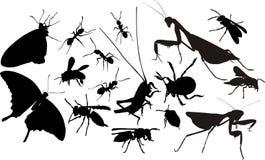 Siluette degli insetti Immagine Stock Libera da Diritti