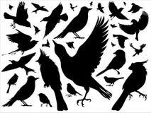 Siluette degli uccelli Fotografie Stock Libere da Diritti
