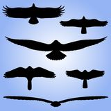 Siluette degli uccelli. royalty illustrazione gratis