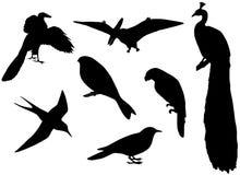 Siluette degli uccelli Fotografia Stock Libera da Diritti