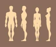 Siluette degli uomini e delle donne anatomia Illustrazione di vettore Fotografia Stock Libera da Diritti