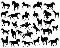 Siluette dei cavalli Immagine Stock