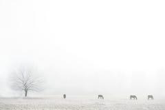 Siluette dei cavalli su un campo nebbioso Immagine Stock