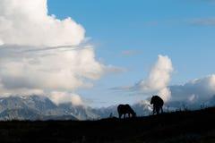 Siluette dei cavalli sulle montagne di un fondo immagini stock libere da diritti