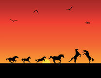 Siluette dei cavalli, tramonto Fotografia Stock Libera da Diritti