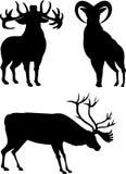 siluette dei cervi Immagini Stock Libere da Diritti