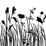 Siluette dei fiori e dell'erba Fotografie Stock Libere da Diritti