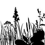 Siluette dei fiori e dell'erba Fotografia Stock Libera da Diritti