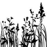 Siluette dei fiori e dell'erba Immagini Stock