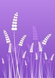 Siluette dei fiori sulla porpora Fotografia Stock