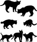 Siluette dei gatti Immagini Stock