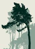Siluette dei pini italiani Fotografia Stock
