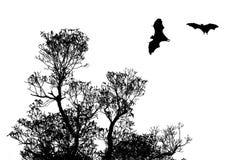 Siluette dei pipistrelli e bello ramo per uso del fondo Fotografie Stock