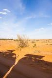 Siluette dei veicoli di safari Fotografia Stock Libera da Diritti