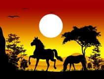 Siluette del cavallo di bellezza con il fondo del paesaggio Immagine Stock