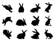 Siluette del coniglio Immagine Stock
