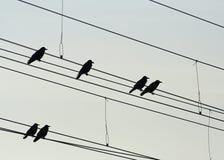 Siluette del corvo Fotografia Stock Libera da Diritti