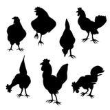 Siluette del gallo e della gallina Fotografie Stock Libere da Diritti