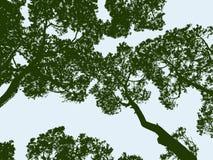 Siluette del legno di pino Fotografia Stock Libera da Diritti