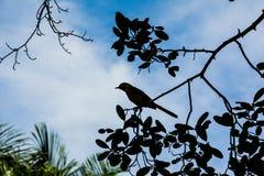Siluette del pájaro imágenes de archivo libres de regalías