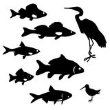 Siluette del pesce del fiume Fotografia Stock
