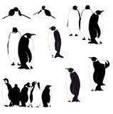 Siluette del pinguino di vettore sul bianco Fotografia Stock Libera da Diritti