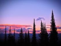 Siluette del pino contro il cielo porpora rosa di tramonto Fotografie Stock
