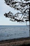Siluette del pino sul fondo del mare fotografia stock