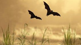 Siluette del pipistrello nel tempo di tramonto Immagini Stock Libere da Diritti