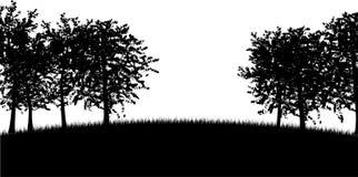 Siluette dell'albero Fotografia Stock Libera da Diritti