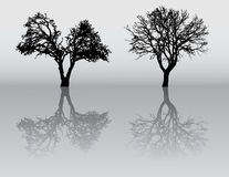 Siluette dell'albero Immagini Stock Libere da Diritti
