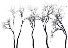 Siluette dell'albero,   Immagine Stock Libera da Diritti