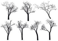 Siluette dell'albero,   Immagini Stock Libere da Diritti