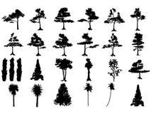 Siluette dell'albero Immagine Stock Libera da Diritti