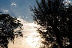 Siluette dell'albero al tramonto Fotografia Stock Libera da Diritti