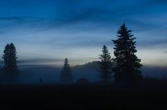 Siluette dell'albero con arrivar a fiumie della nebbia immagini stock