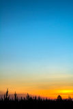 Siluette dell'albero con il cielo Fotografia Stock Libera da Diritti