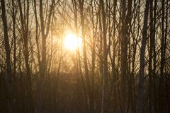 Siluette dell'albero nel sole immagini stock libere da diritti