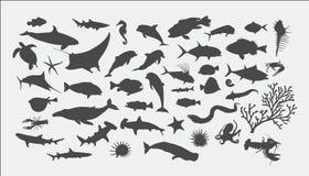 Siluette dell'animale di mare Fotografia Stock Libera da Diritti