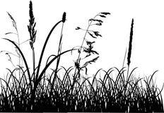 Siluette dell'erba di caduta isolate su bianco Fotografia Stock