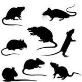 Siluette dell'ratti Illustrazione Fotografie Stock