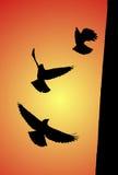 Siluette dell'uccello Fotografie Stock Libere da Diritti